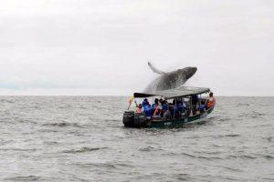 Alerta por turistas que se lanzaron al mar durante avistamiento de ballenas