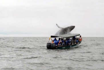 Avistamientos: Buenaventura celebra la llegada de las ballenas jorobadas