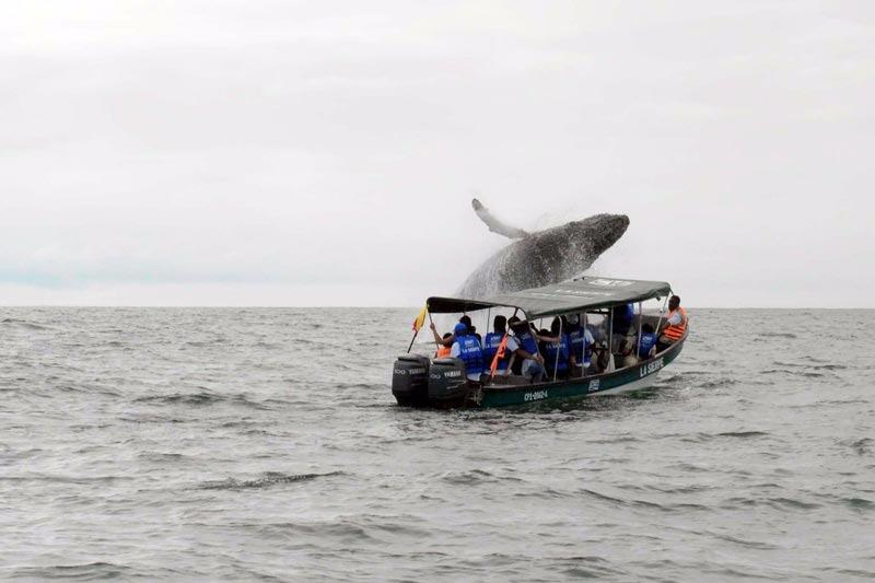 Se busca que la tradición cultural de avistamiento de ballenas sea declarada como patrimonio inmaterial de la nación