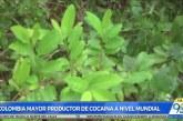 Preocupante: 19.000 familias derivan su sustento de la siembra coca en Tumaco