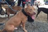 En barrio Petecuy II se realizó jornada de registro de perros potencialmente peligrosos