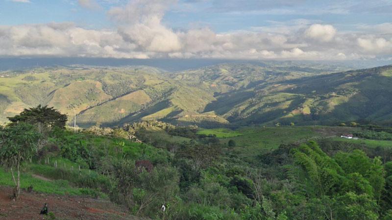 Deforestación anual en Colombia se redujo en un 19,2%, según el Ideam. En 2018, no pasaba del 10%