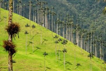 Mediante campañas, CVC impulsa sostenibilidad ambiental en Semana Santa