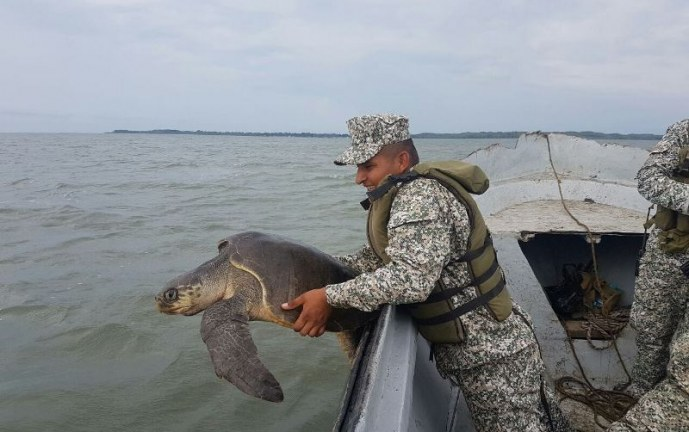 Armada Nacional logró la liberación de tortuga marina en el océano pacífico