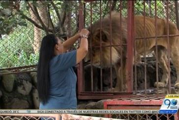 'Tuiteratón' en contra de eutanasia para animales de refugio Villa Lorena
