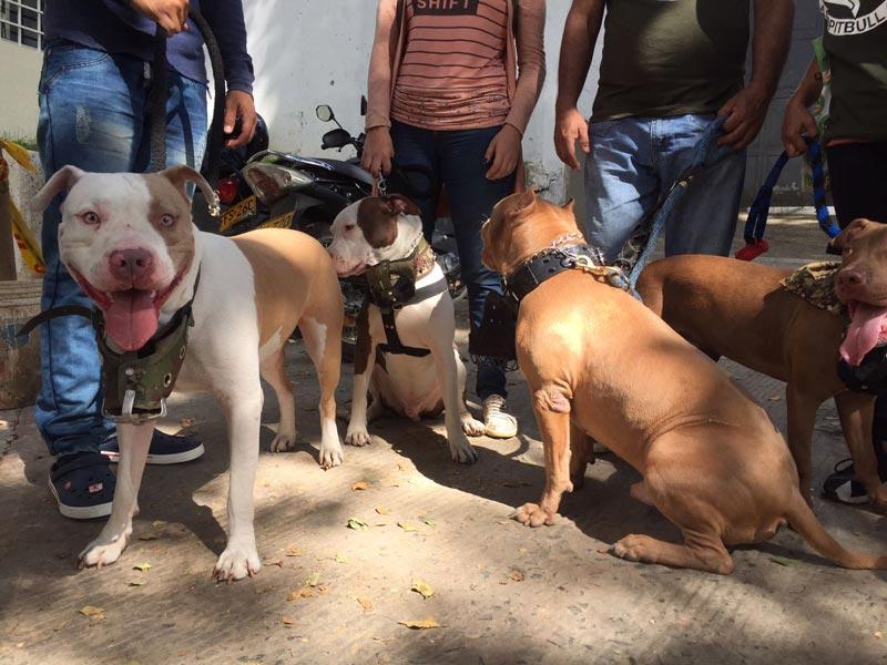 Habilitan sitios para pagar por chip de perros catalogados como peligrosos