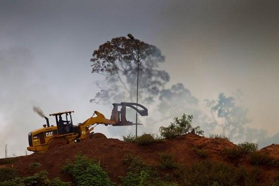 """""""Estamos viviendo a costa de los recursos naturales de las futuras generaciones"""": WWF"""