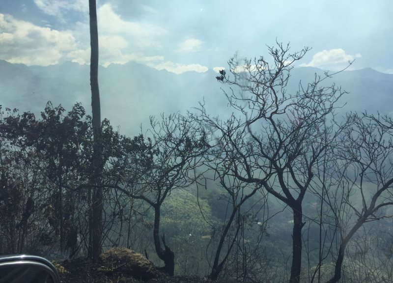 Temporada de calor ha causado 180 incendios forestales en el Valle