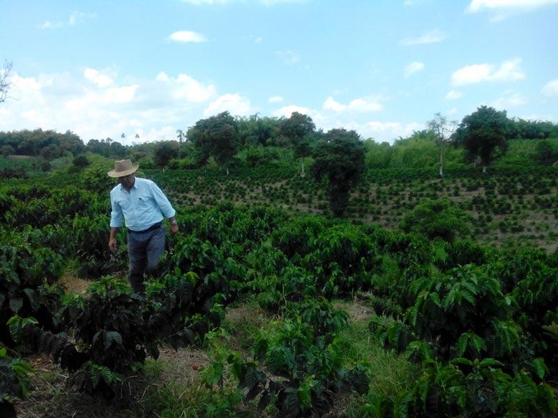 En Ulloa, Valle preparan nueva apuesta regional en la producción de café especial