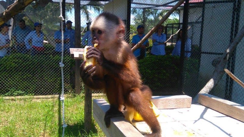 160 animales silvestres fueron reubicados en resguardo animal de La Unión, Valle