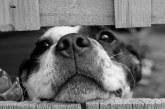 Justicia animal: ¿Severidad en las leyes o falta de denunciantes?
