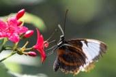Disfrute de la belleza de estos apacibles insectos: un nuevo mariposario en Cali