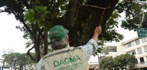 Dagma activó proceso de mantenimiento para más de mil árboles en Cali