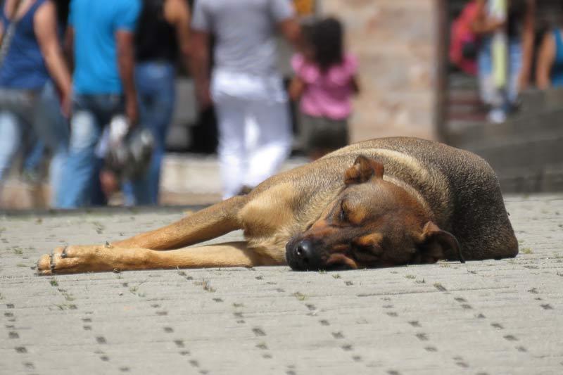 Polémica por circular interna en Alcaldía de Yumbo que prohíbe alimentar animales callejeros