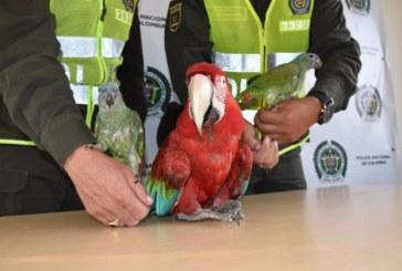 Policía tras la pista de comercio ilícito de animales silvestres por redes sociales