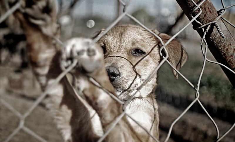 Realizarán 'Vacunatón' de perros y gatos para prevenir casos de rabia en Valle