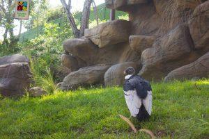 zoologico-cali-inaugura-nuevo-habitat-camino-andes-22-09-2017