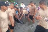 En video: Armada Nacional rescató a ballenato que encalló en playa de Juanchaco
