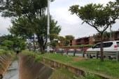 Dagma ratificó intervención a árboles del corredor vial por donde pasará la Feria de Cali