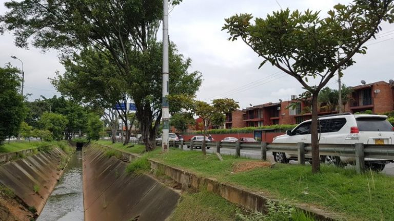 Dagma ratificó intervención a árboles del corredor vial por donde pasara la Feria de Cali