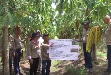 Excombatientes en proceso de reintegración se forman en actividades agrícolas en Toro, Valle