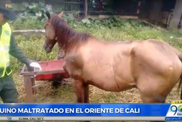 Policía Ambiental rescató caballo que era maltratado en el oriente de Cali