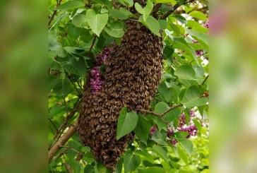 Siete personas fueron atacadas por enjambre de abejas en balneario de La Buitrera