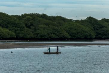 Cabo Manglares, nueva área protegida del Pacífico colombiano