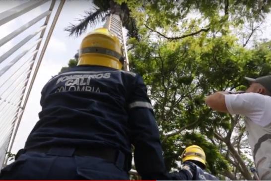 Mico escondido en un árbol evadió rescate de los Bomberos en la ladera de Cali