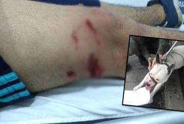 Perro pitbull mordió a dos jóvenes luego de entrar a colegio Eustaquio Palacios