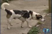 Gobierno de Cali adquirió el lote para construir el Centro de Atención Animal