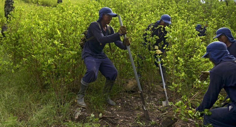 Jamundí no se sumó al acuerdo para la sustitución voluntaria de cultivos ilícitos