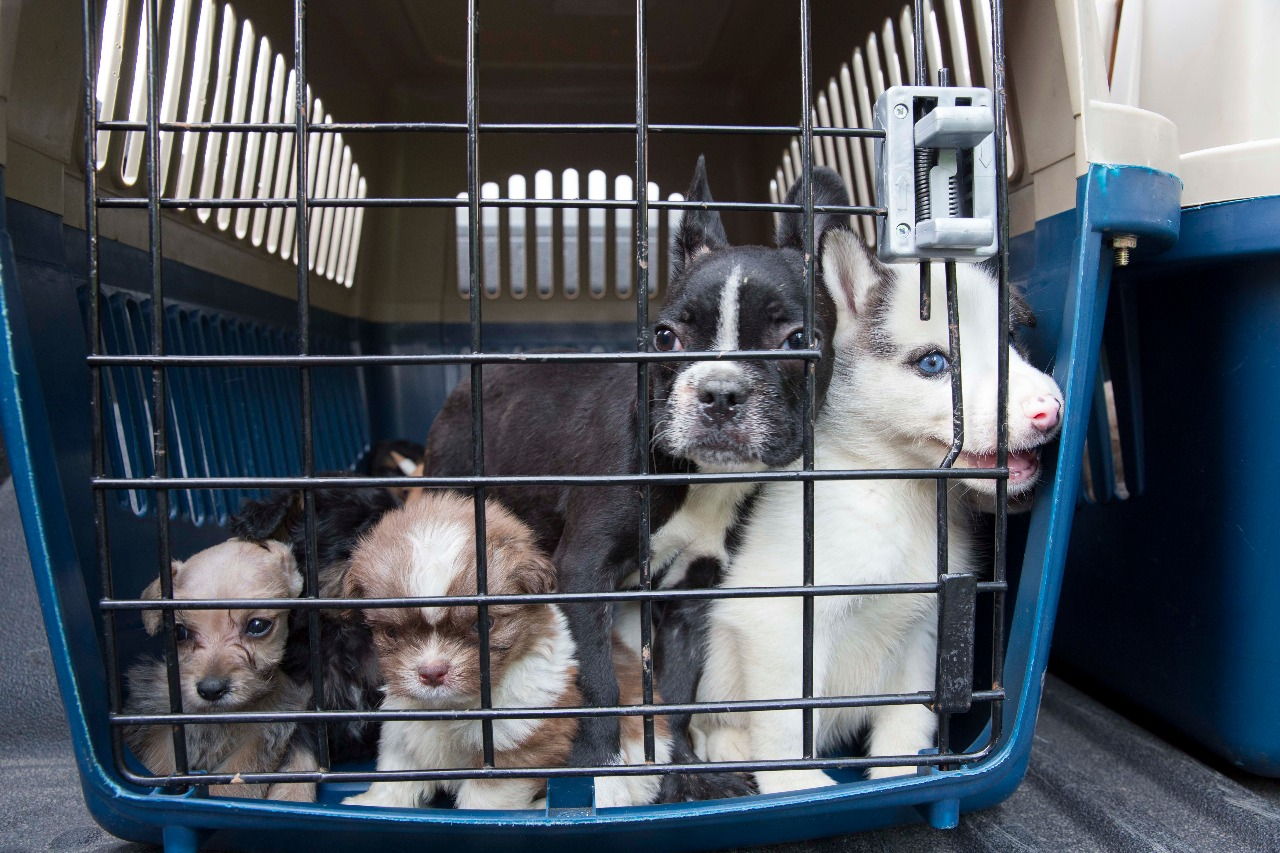 Mascotas decomisadas en diciembre por las autoridades en Cali ya pueden ser adoptadas