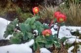 ¡Hermoso! La nieve regresó luego de 20 años al páramo de Las Tinajas en Florida, Valle.