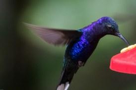 Cali aviturística: Birdfair 2018 traerá a David Lindo, The Urban Birder