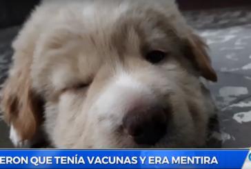 Caleños denuncian que vendedores de mascotas callejeras engañan a los clientes