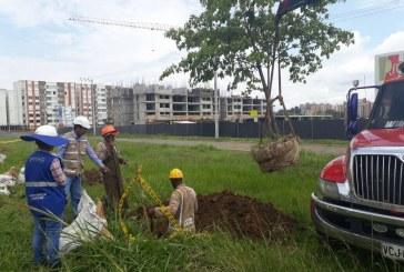Comunidad de Valle del Lili protesta por traslado de árboles en obras de Terminal Sur
