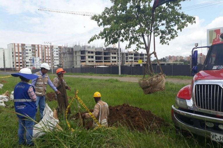 Continúan las manifestaciones por tala de árboles en la obra del Terminal Sur del MIO
