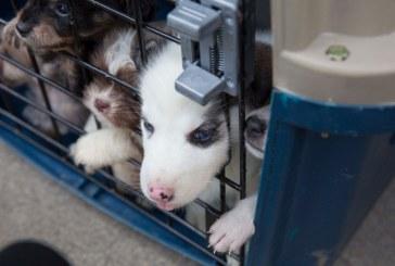 ¿Dónde están? Paz Animal denunció que al menos 6 cachorros incautados no aparecen
