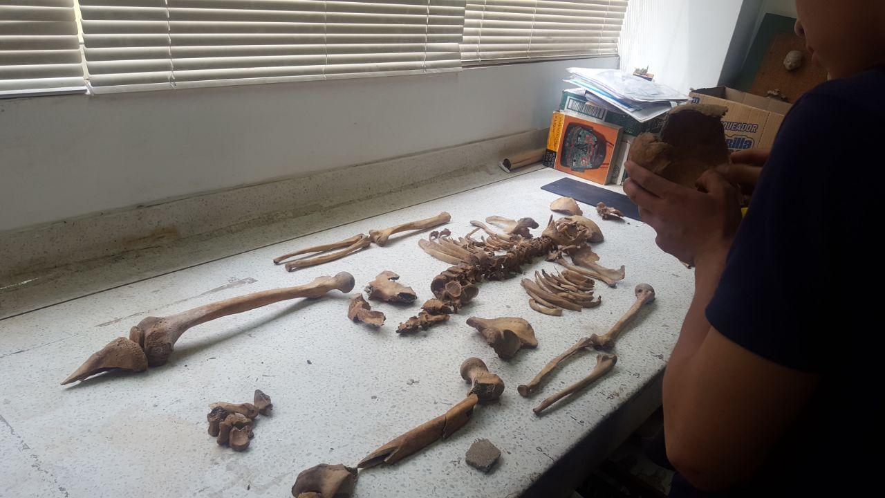 Trabajadores encontraron restos arqueológicos en zona rural de Palmira