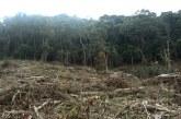 Tres personas capturadas por tala ilegal de 320 hectáreas de bosque en Bugalagrande