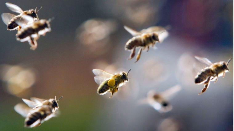 Cinco estudiantes resultaron afectados por ataque de abejas en el oriente de Cali