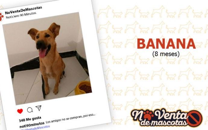 Hola, me llamo Banana y me gustaría ser tu nueva amiga
