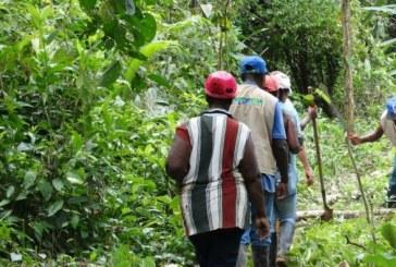 Bajo Calima, Valle del Cauca, uno de los 'Núcleos Forestales' de Colombia