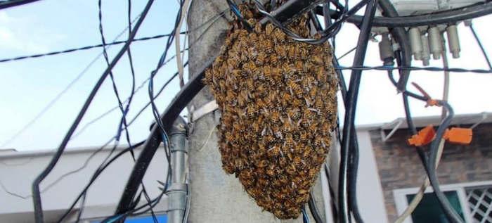 incidentes con abejas