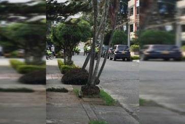 Balacera en El Ingenio, sur de Cali, causó pánico entre los habitantes del sector