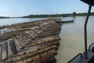 Más de 930 metros cúbicos de madera fueron incautados en Chocó y Valle del Cauca