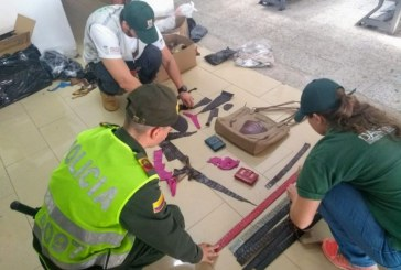 Capturan a hombre que traficaba productos con piel de babilla, serpiente y caimán