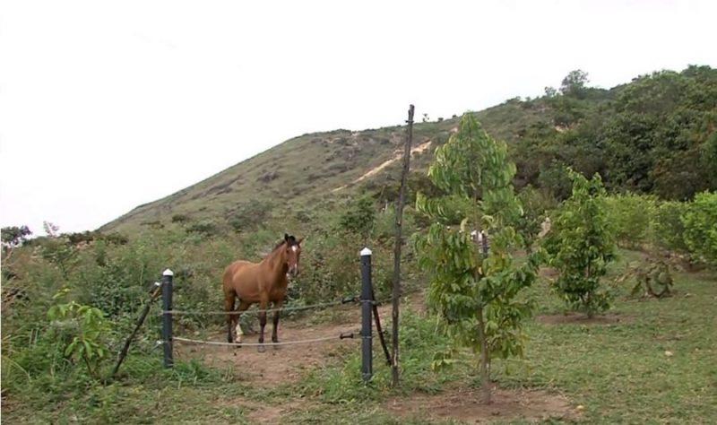 Buscan recuperar terreno en el cerro de las Tres Cruces, familia dice que son dueños