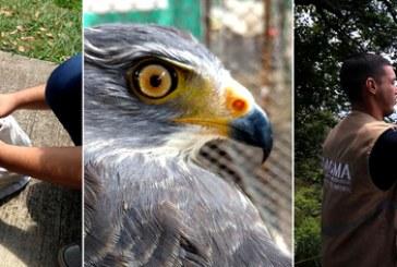 Día mundial de Vida Silvestre: 10 animales fueron liberados en Ecoparque Bataclán